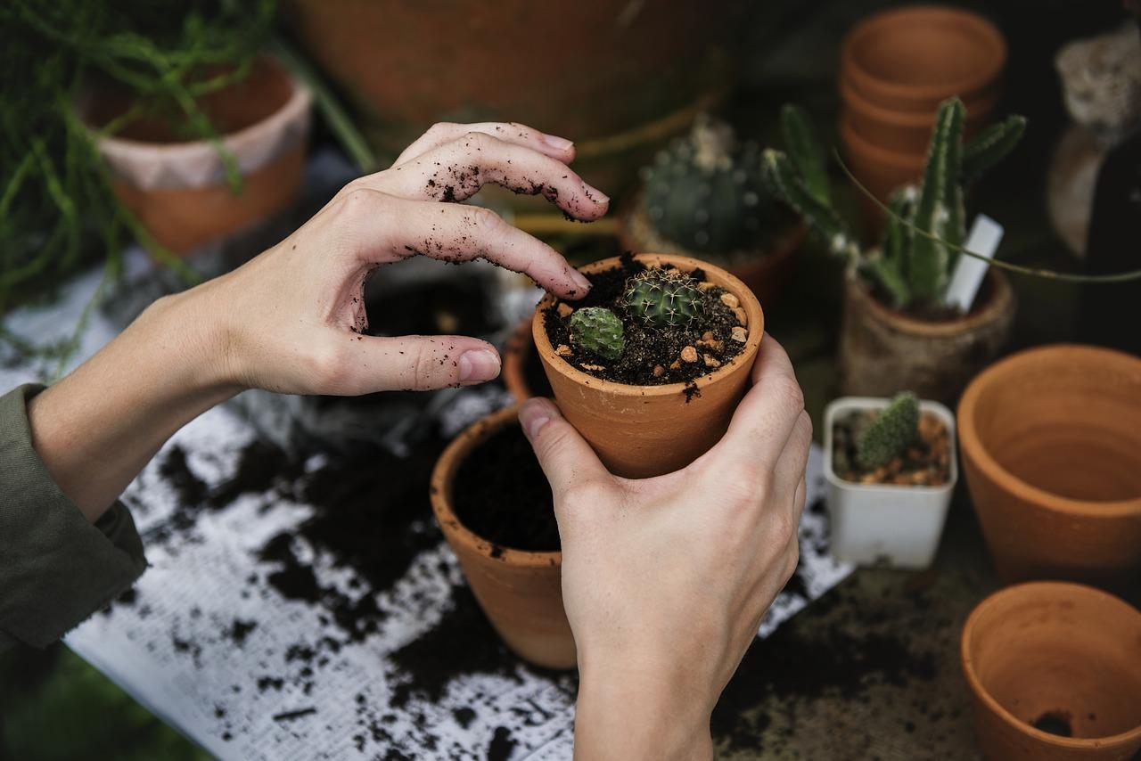 Consejos para mantener el jardín perfecto en verano